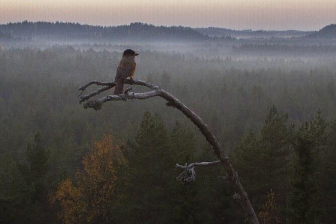 Eine Geschichte vom Wald