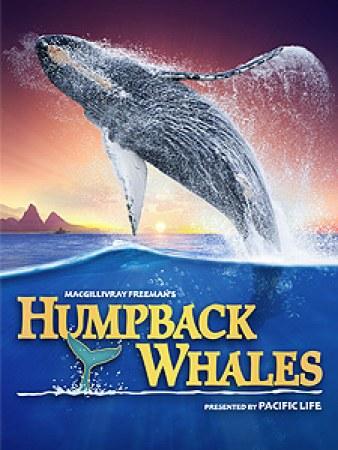 Humpback Whales 3D