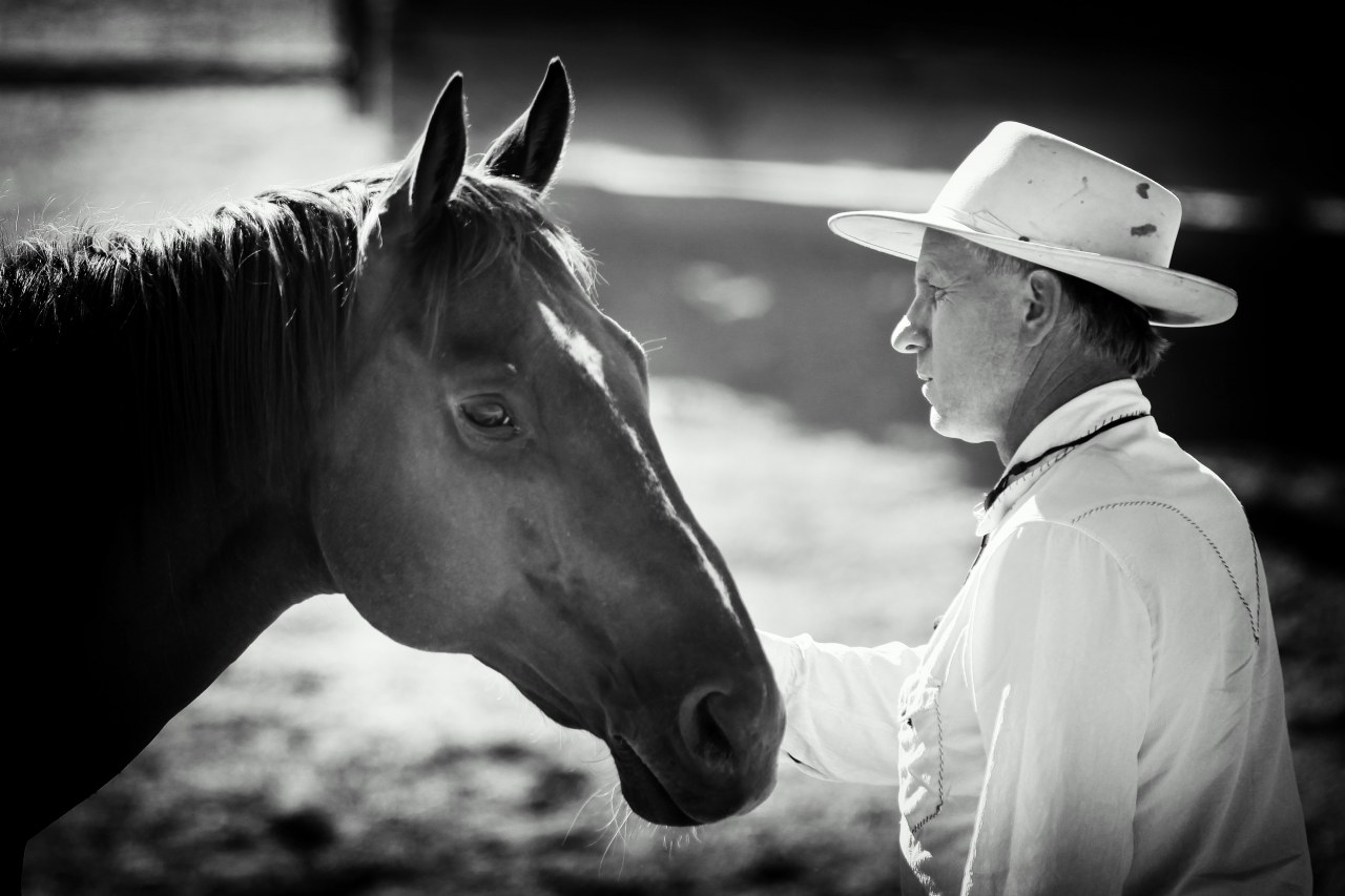 Buck - Der wahre Pferdeflüsterer - Bild 11
