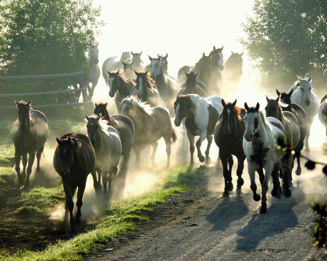Buck - Der wahre Pferdeflüsterer - Bild 15