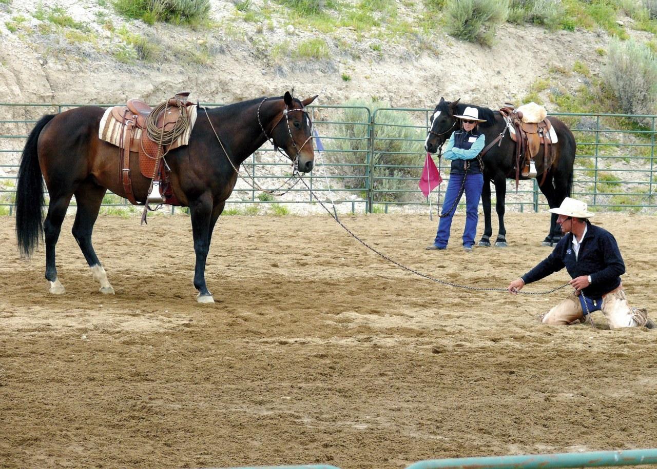 Buck - Der wahre Pferdeflüsterer - Bild 17