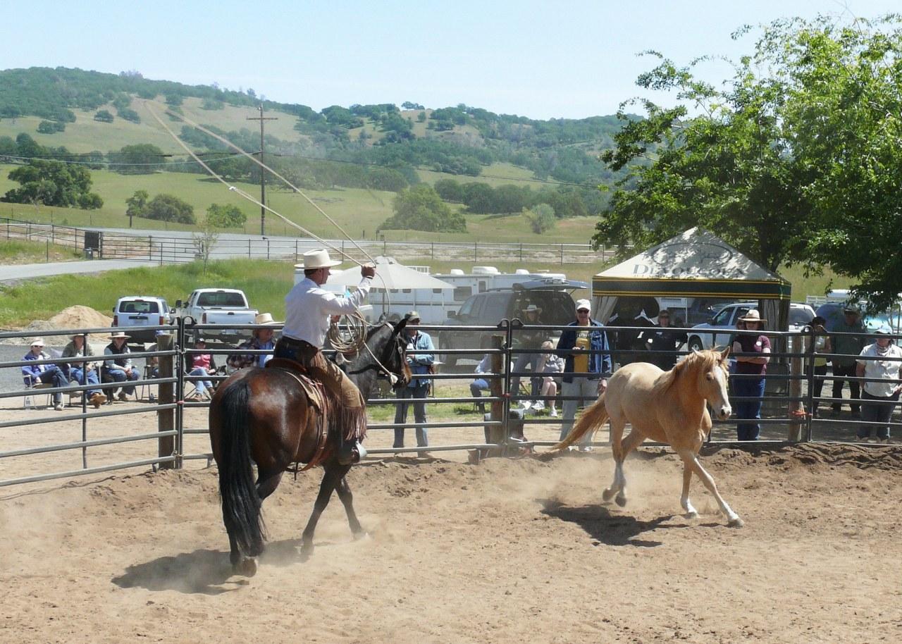 Buck - Der wahre Pferdeflüsterer - Bild 19