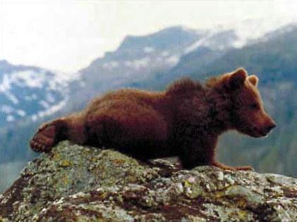 Der Bär - Bild 2