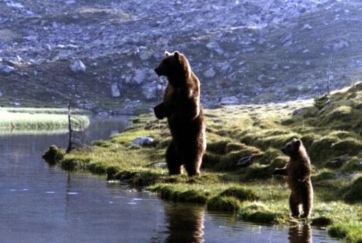 Der Bär - Bild 3