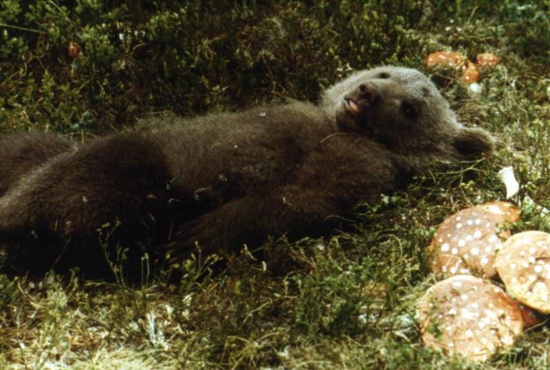 Der Bär - Bild 4