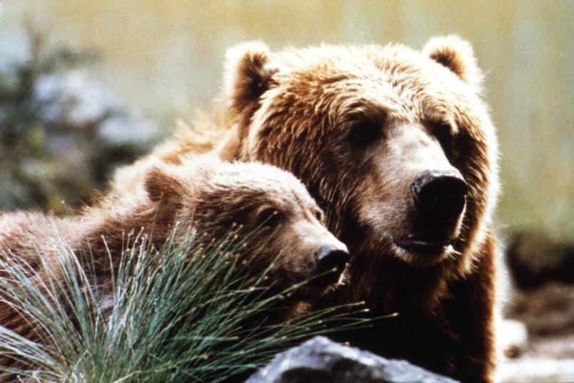 Der Bär - Bild 5