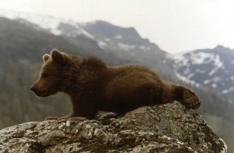 Der Bär - Bild 6