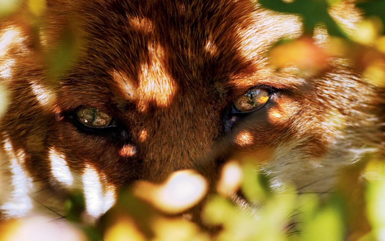 Der Fuchs und das Mädchen - Bild 5