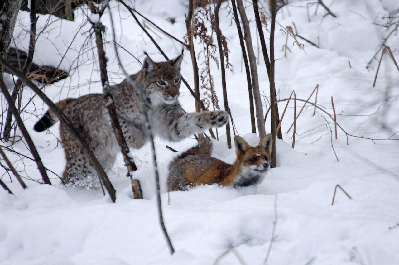 Der Fuchs und das Mädchen - Bild 7