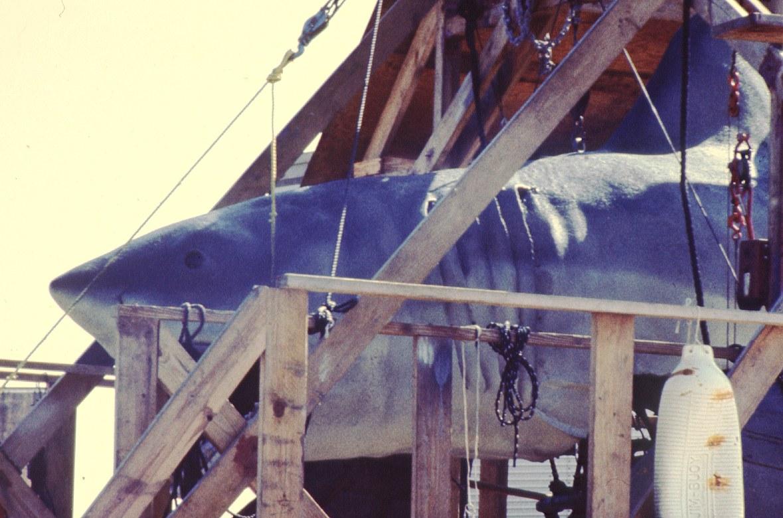 Der weiße Hai - Bild 3