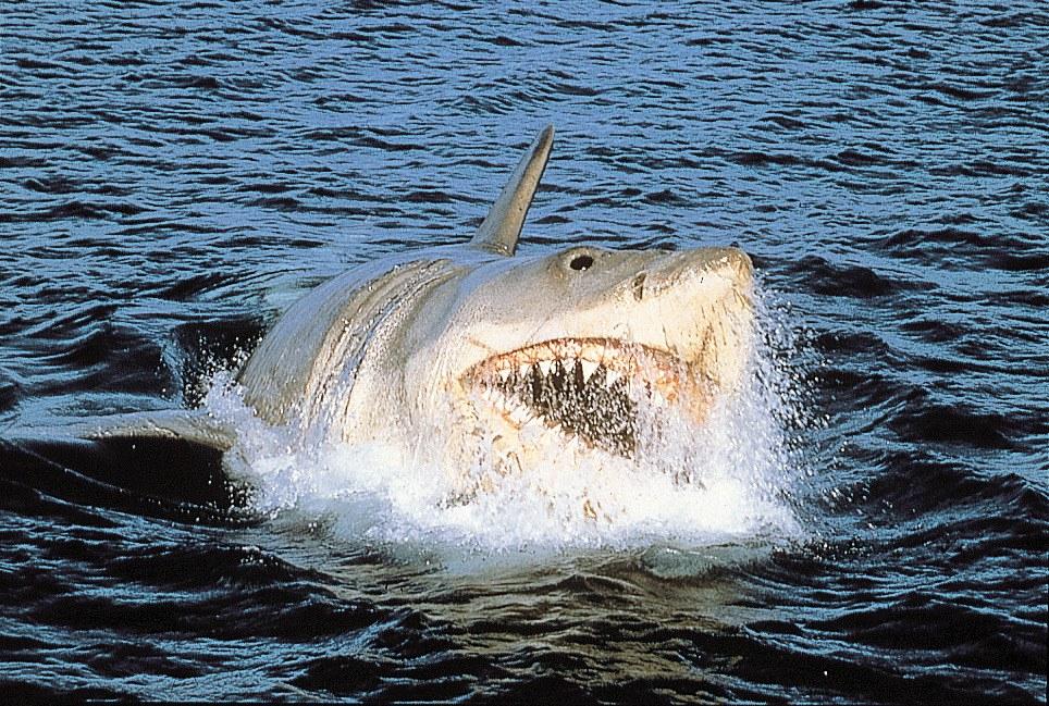 Der weiße Hai - Bild 5