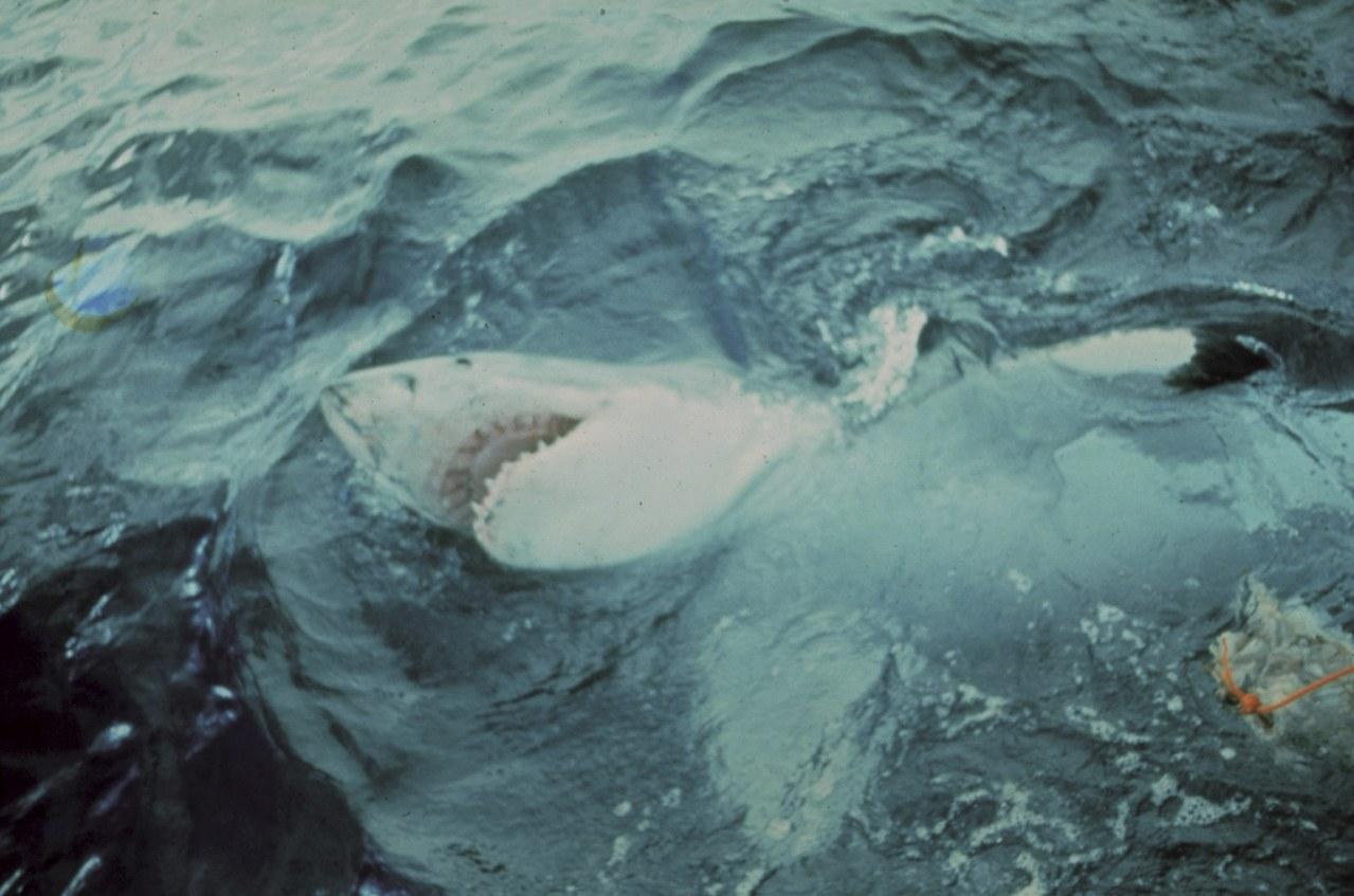 Der weiße Hai - Bild 15