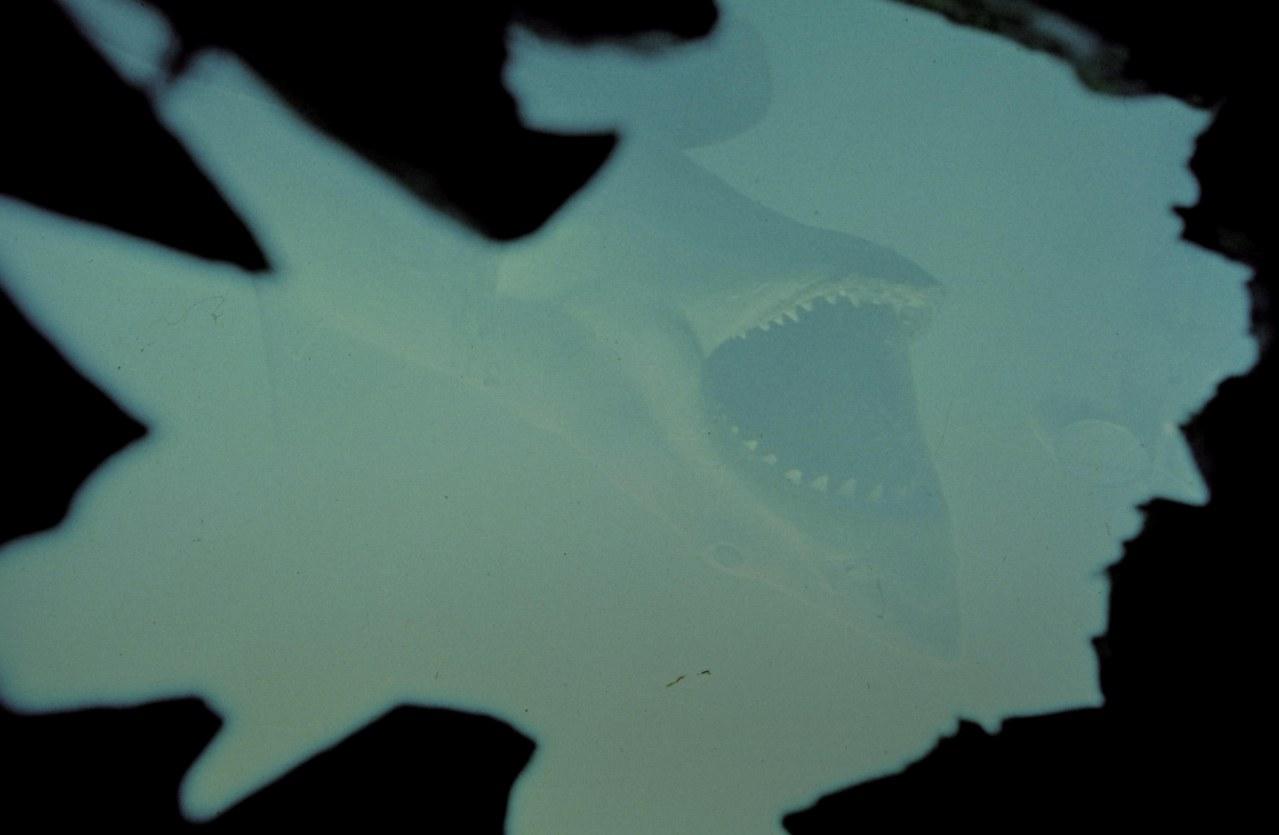 Der weiße Hai - Bild 16
