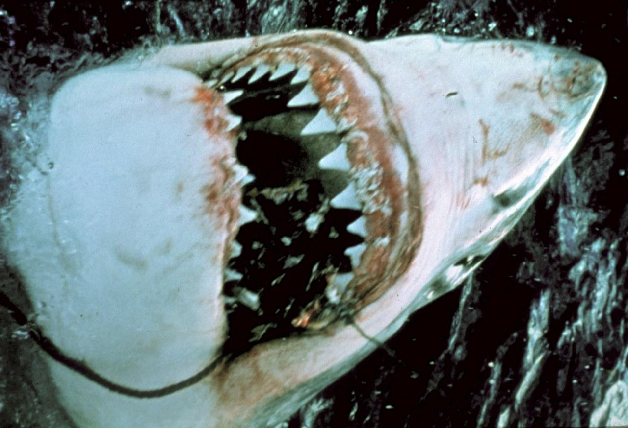 Der weiße Hai - Bild 17
