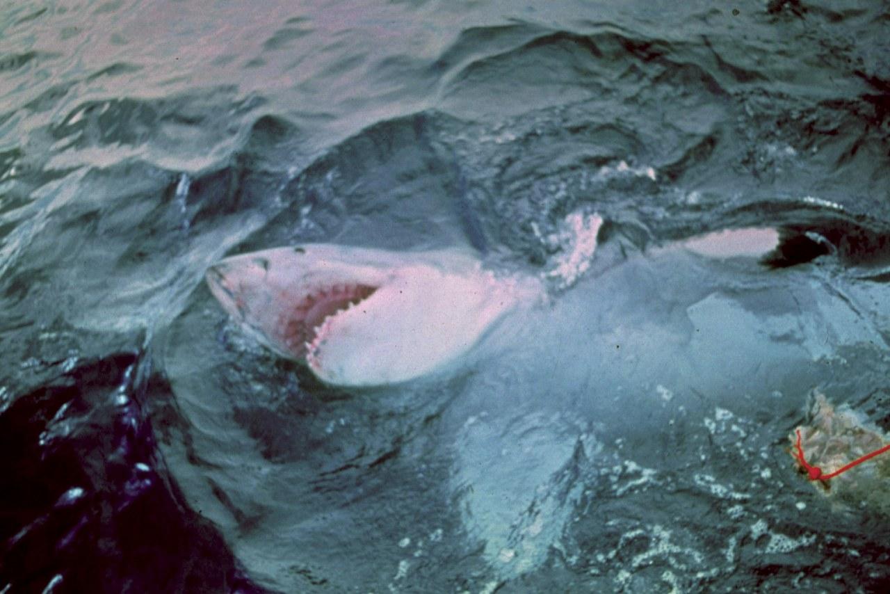 Der weiße Hai - Bild 20
