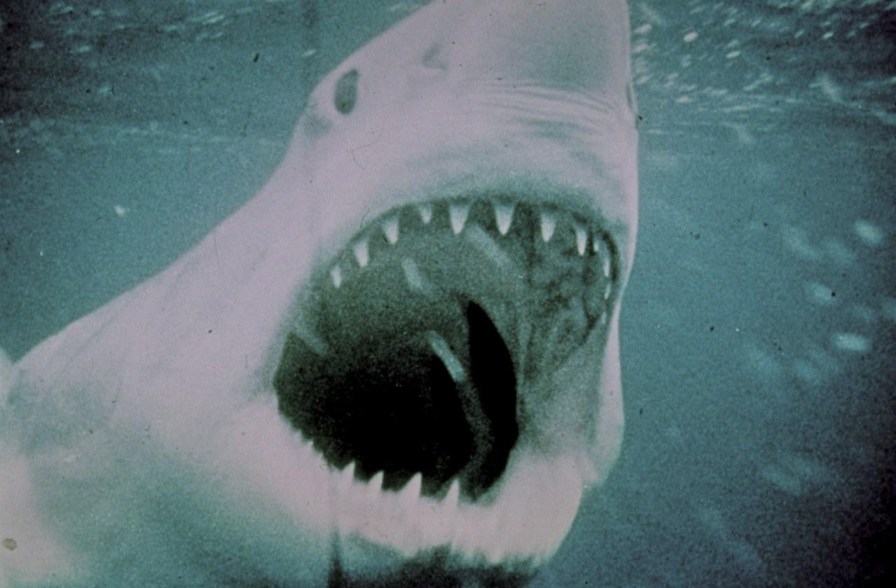 Der weiße Hai - Bild 21