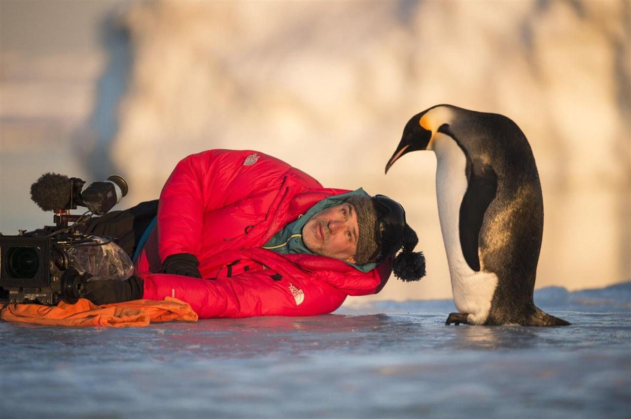 Die Reise der Pinguine 2 - Bild 3