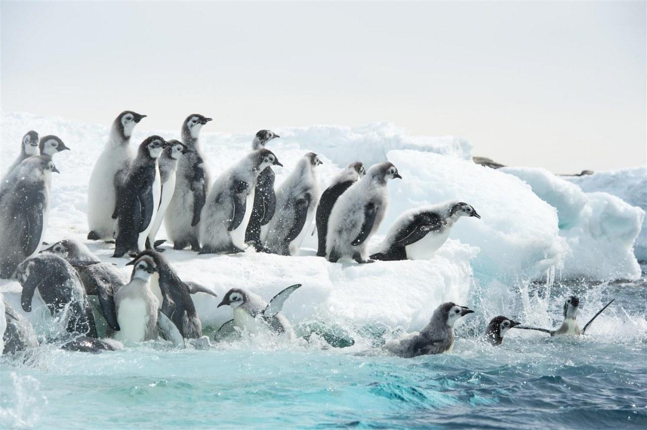 Die Reise der Pinguine 2 - Bild 5