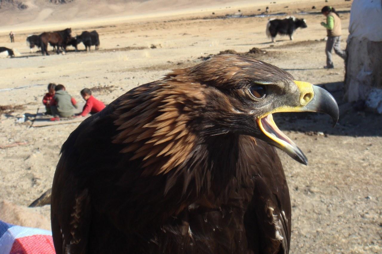 Die Stimme des Adlers - Bild 4
