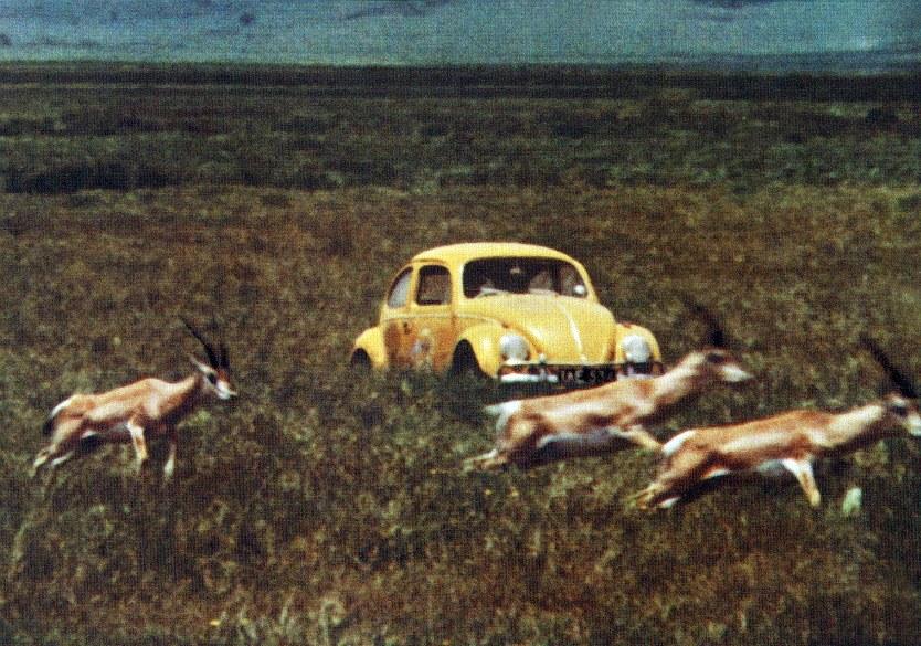 Ein Käfer geht auf's Ganze - Bild 5