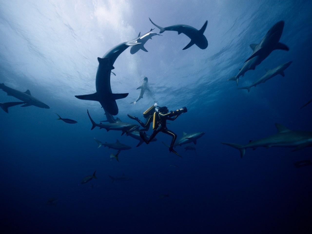 Jacques - Entdecker der Ozeane - Bild 4