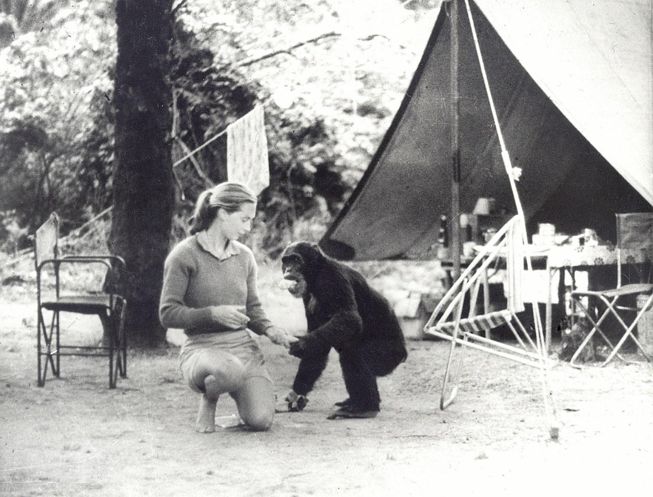 Jane's Journey - Die Lebensreise der Jane Goodall - Bild 5
