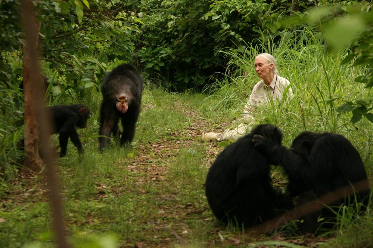 Jane's Journey - Die Lebensreise der Jane Goodall - Bild 11