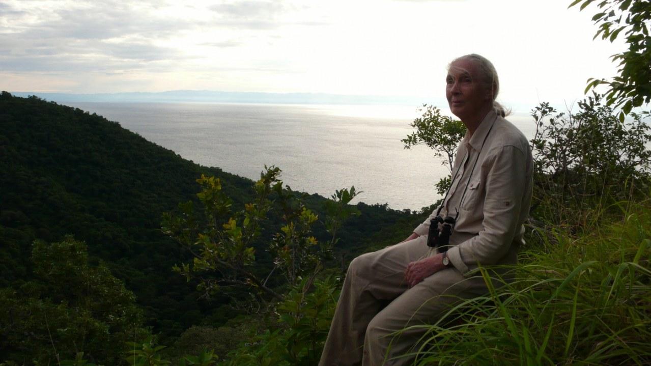Jane's Journey - Die Lebensreise der Jane Goodall - Bild 12