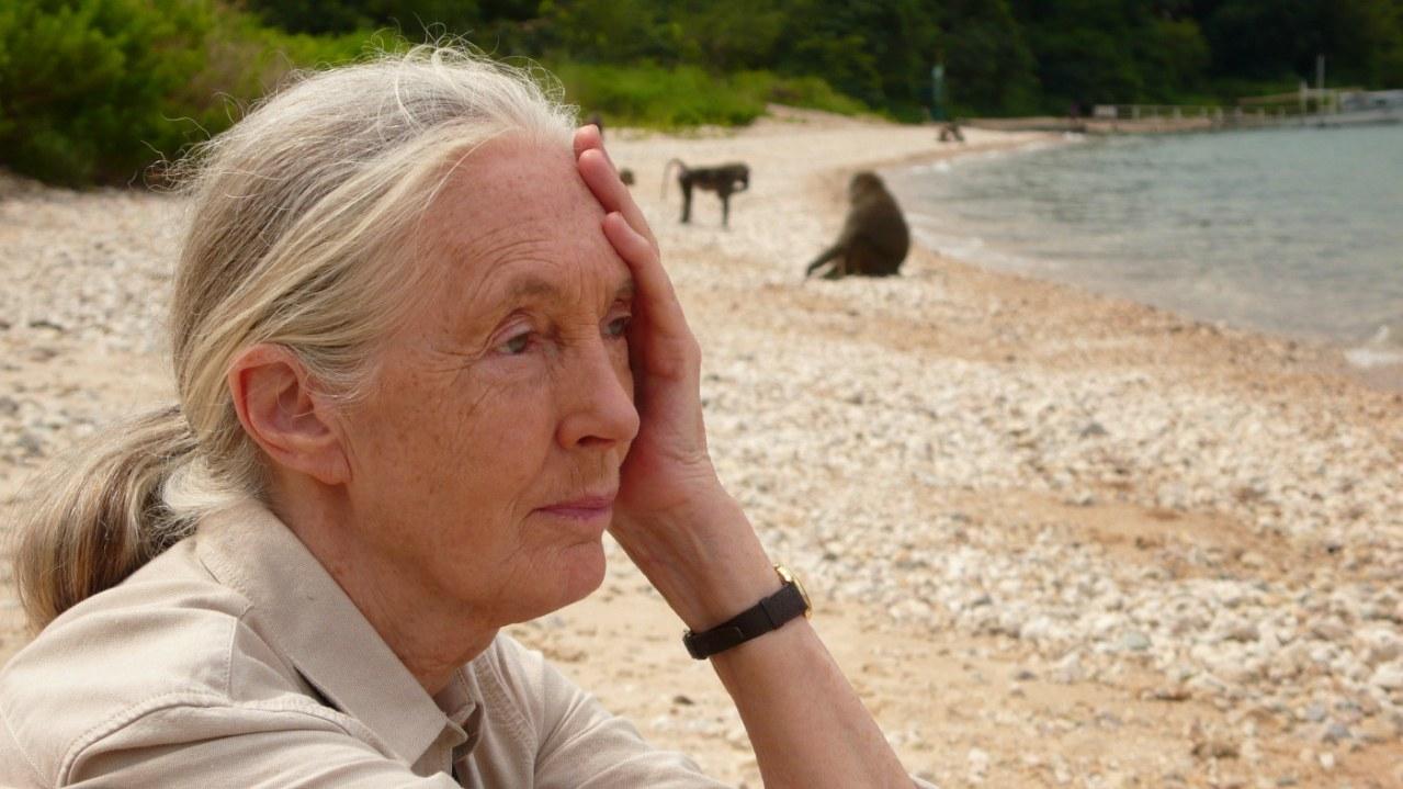 Jane's Journey - Die Lebensreise der Jane Goodall - Bild 13