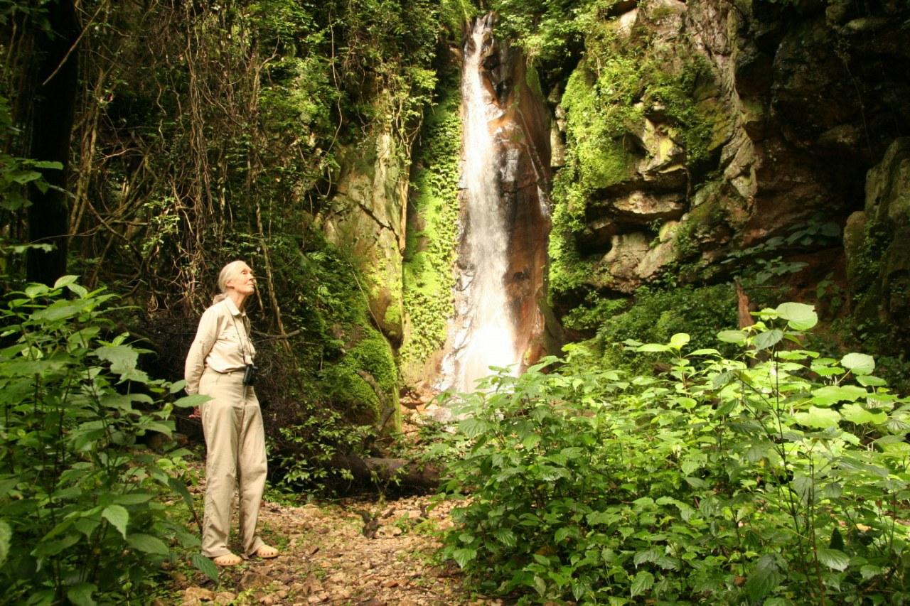 Jane's Journey - Die Lebensreise der Jane Goodall - Bild 14