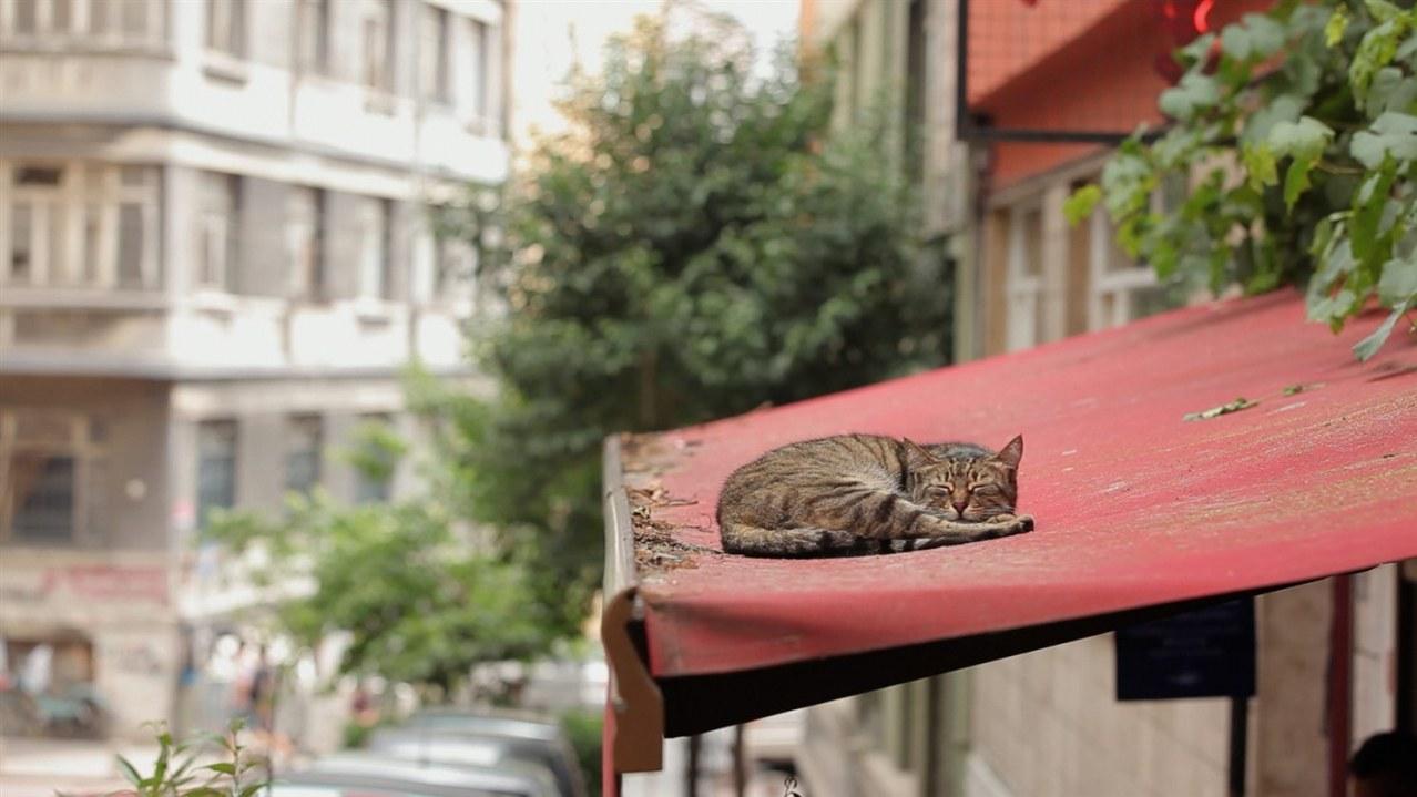 Kedi - Von Katzen und Menschen - Bild 1