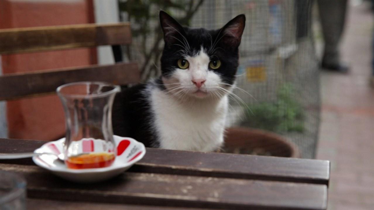Kedi - Von Katzen und Menschen - Bild 2