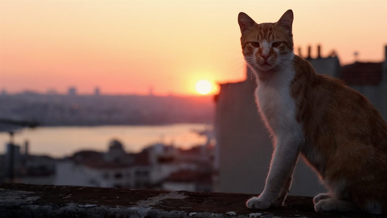 Kedi - Von Katzen und Menschen - Bild 3