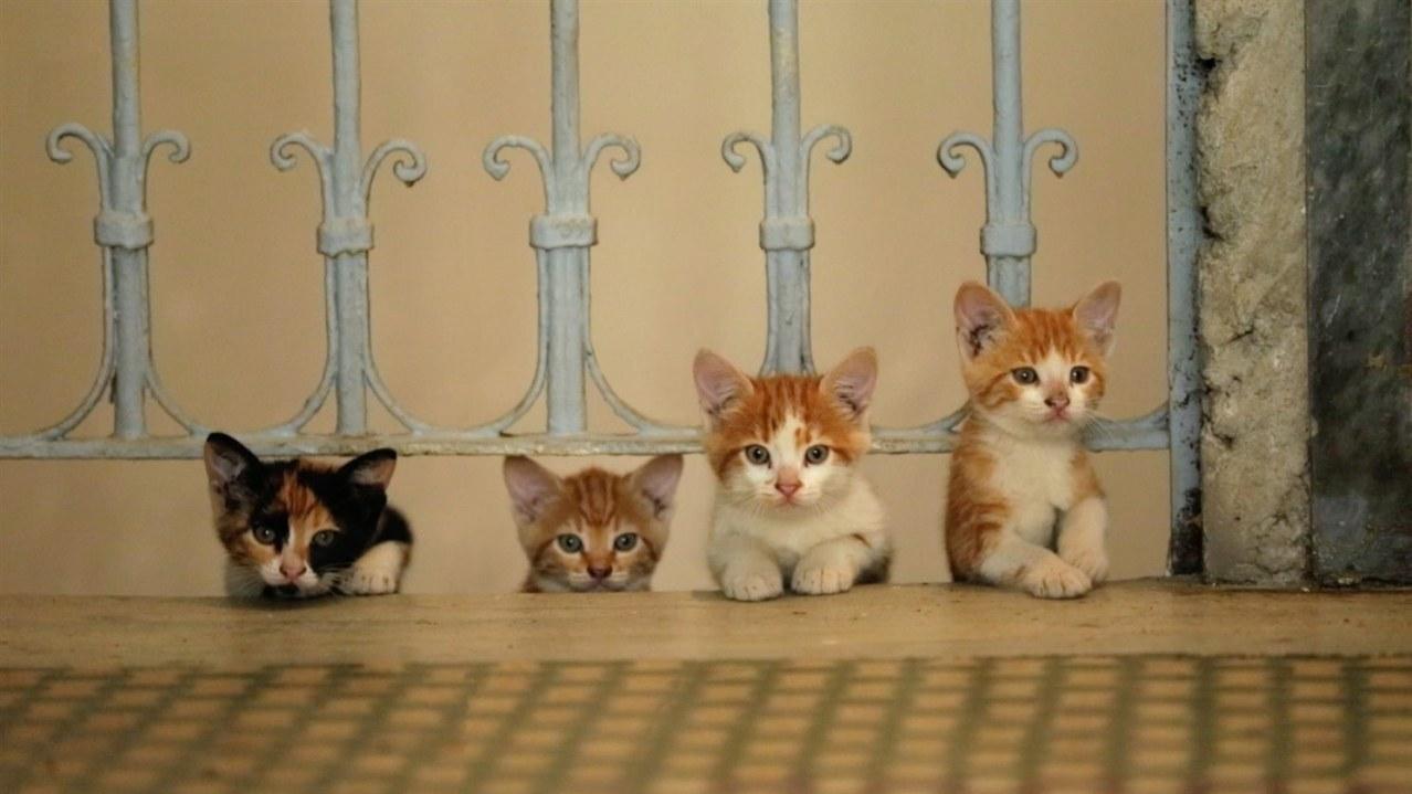 Kedi - Von Katzen und Menschen - Bild 4