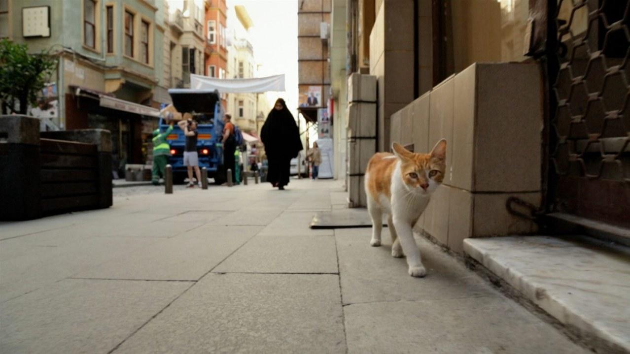 Kedi - Von Katzen und Menschen - Bild 5