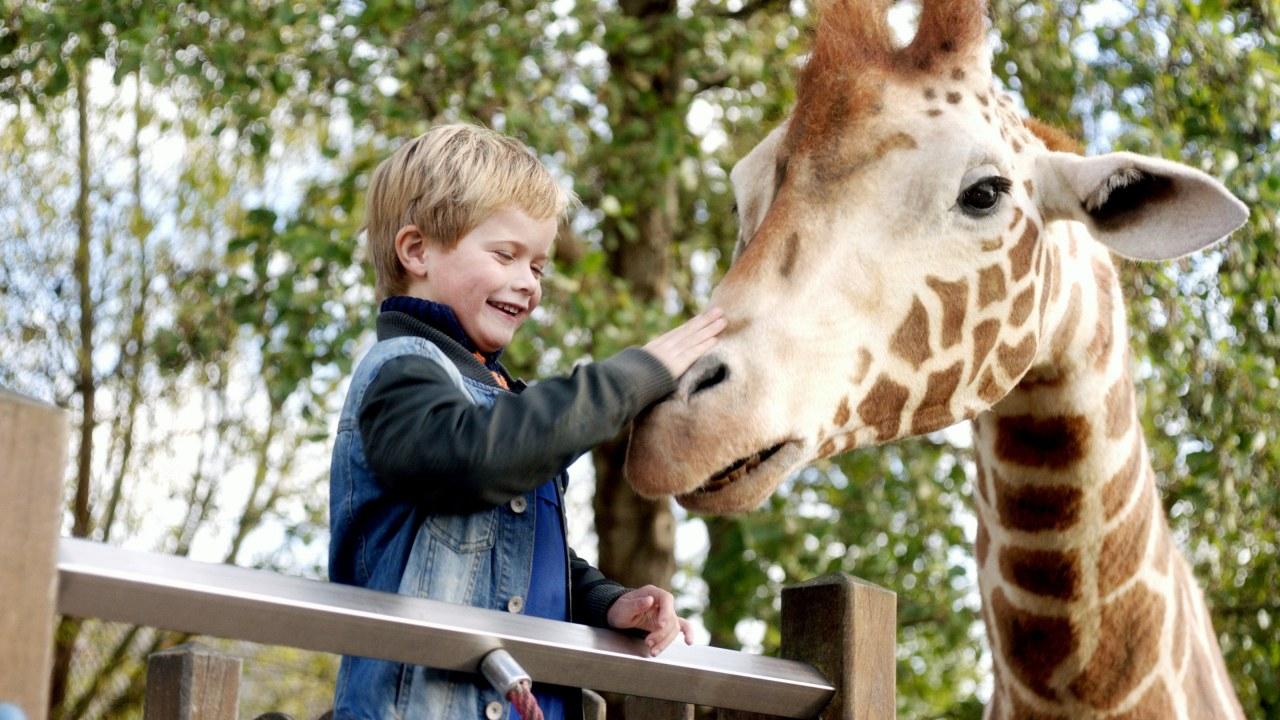 Mein Freund, die Giraffe - Bild 1