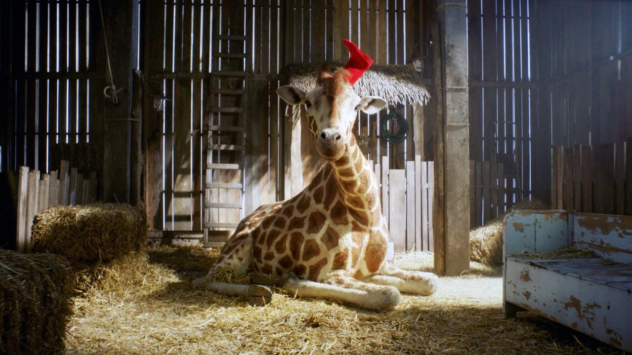 Mein Freund, die Giraffe - Bild 5