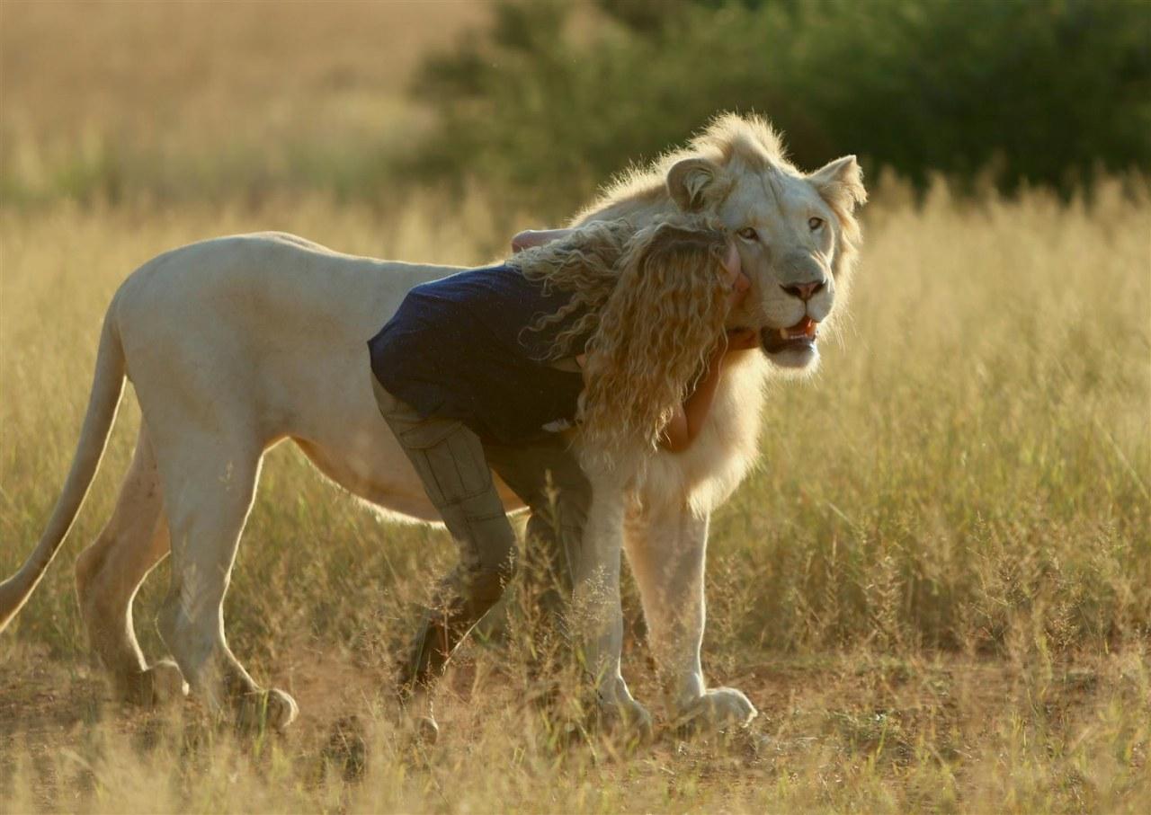 Mia und der weiße Löwe - Bild 1