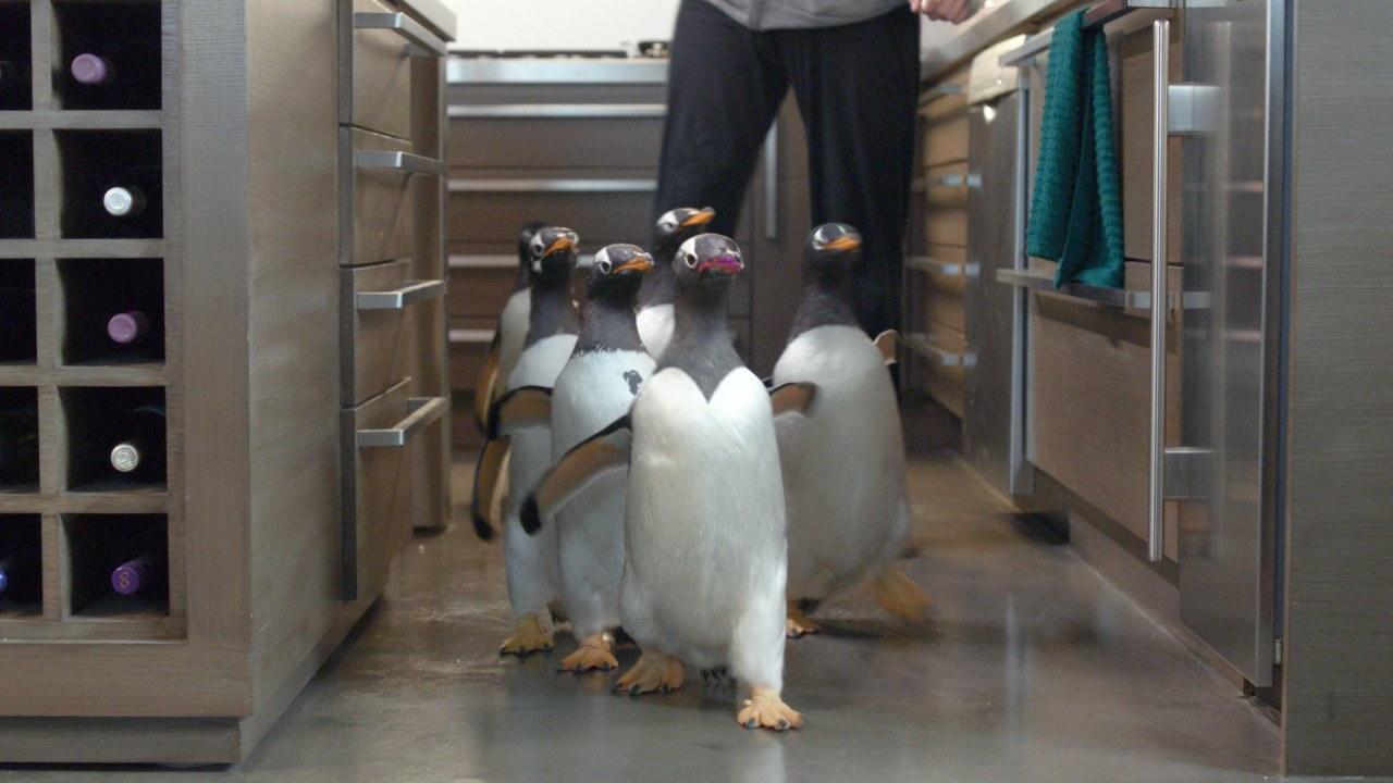 Mr. Poppers Pinguine - Bild 6