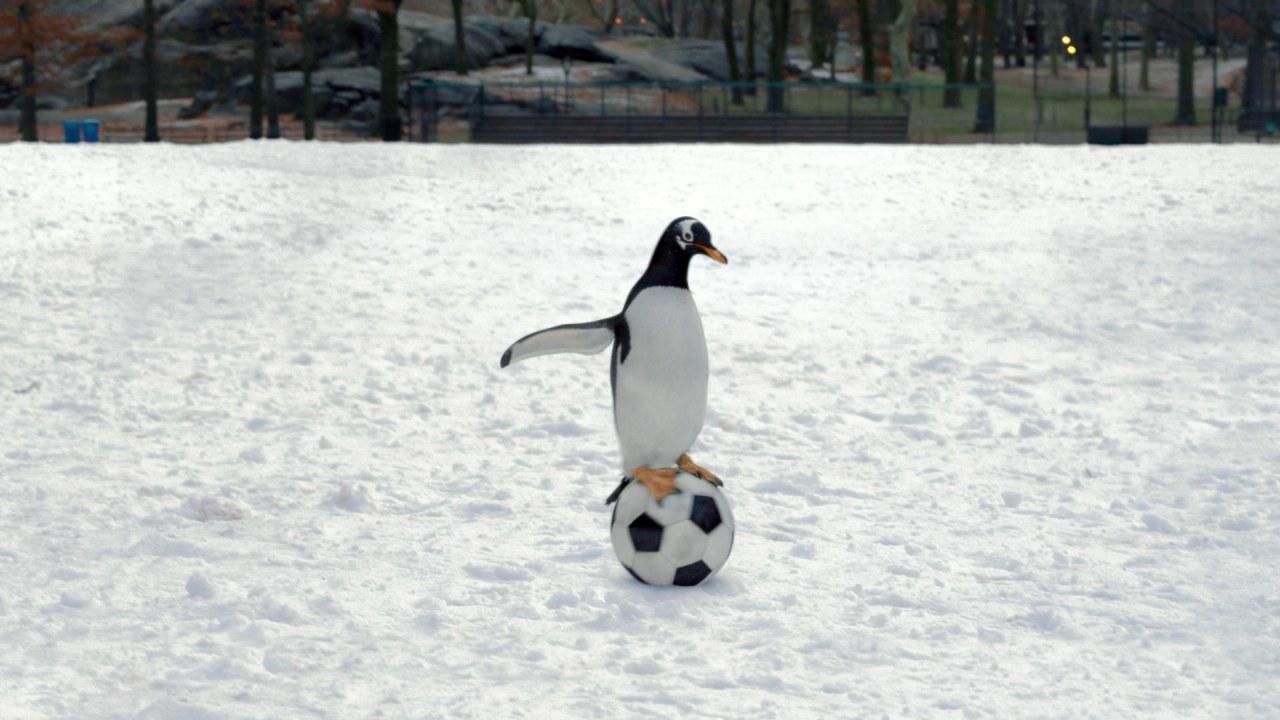 Mr. Poppers Pinguine - Bild 7