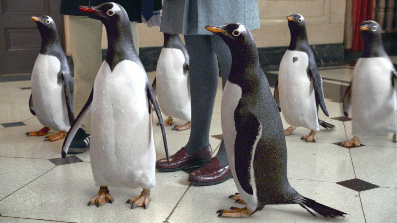 Mr. Poppers Pinguine - Bild 8