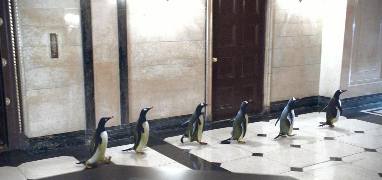 Mr. Poppers Pinguine - Bild 9
