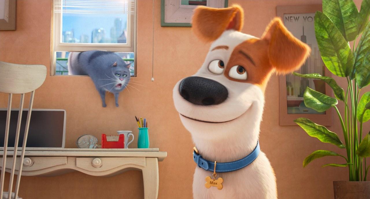 Pets - Bild 1