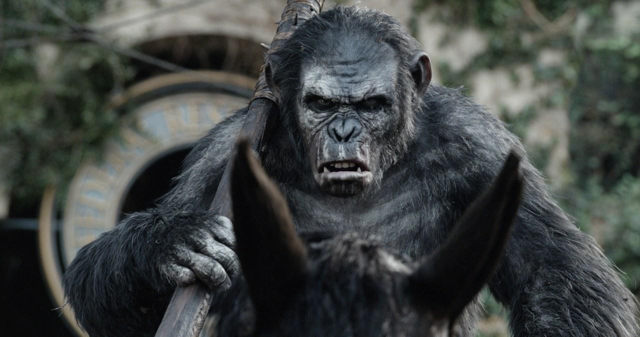 Planet der Affen - Revolution - Bild 16