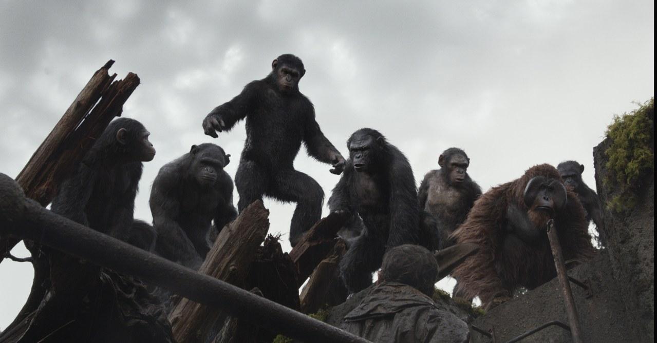 Planet der Affen - Revolution - Bild 23