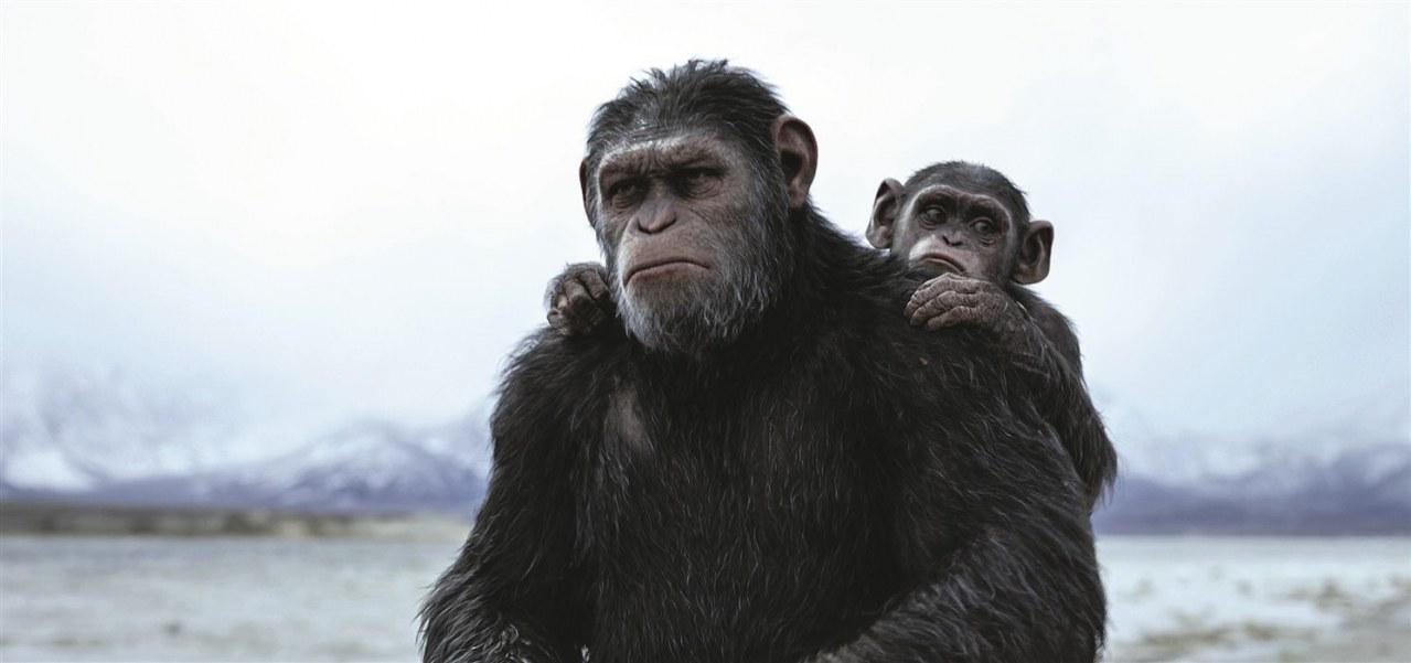 Planet der Affen: Survival - Bild 2