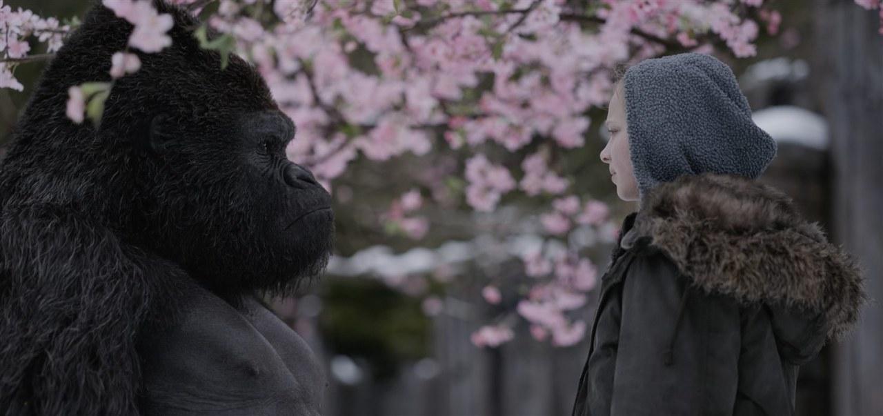 Planet der Affen: Survival - Bild 4