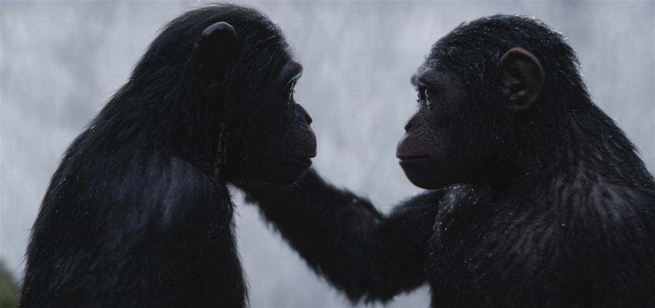Planet der Affen: Survival - Bild 9