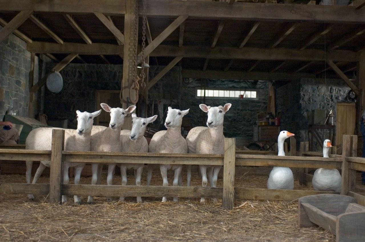 Schweinchen Wilbur und seine Freunde - Bild 16