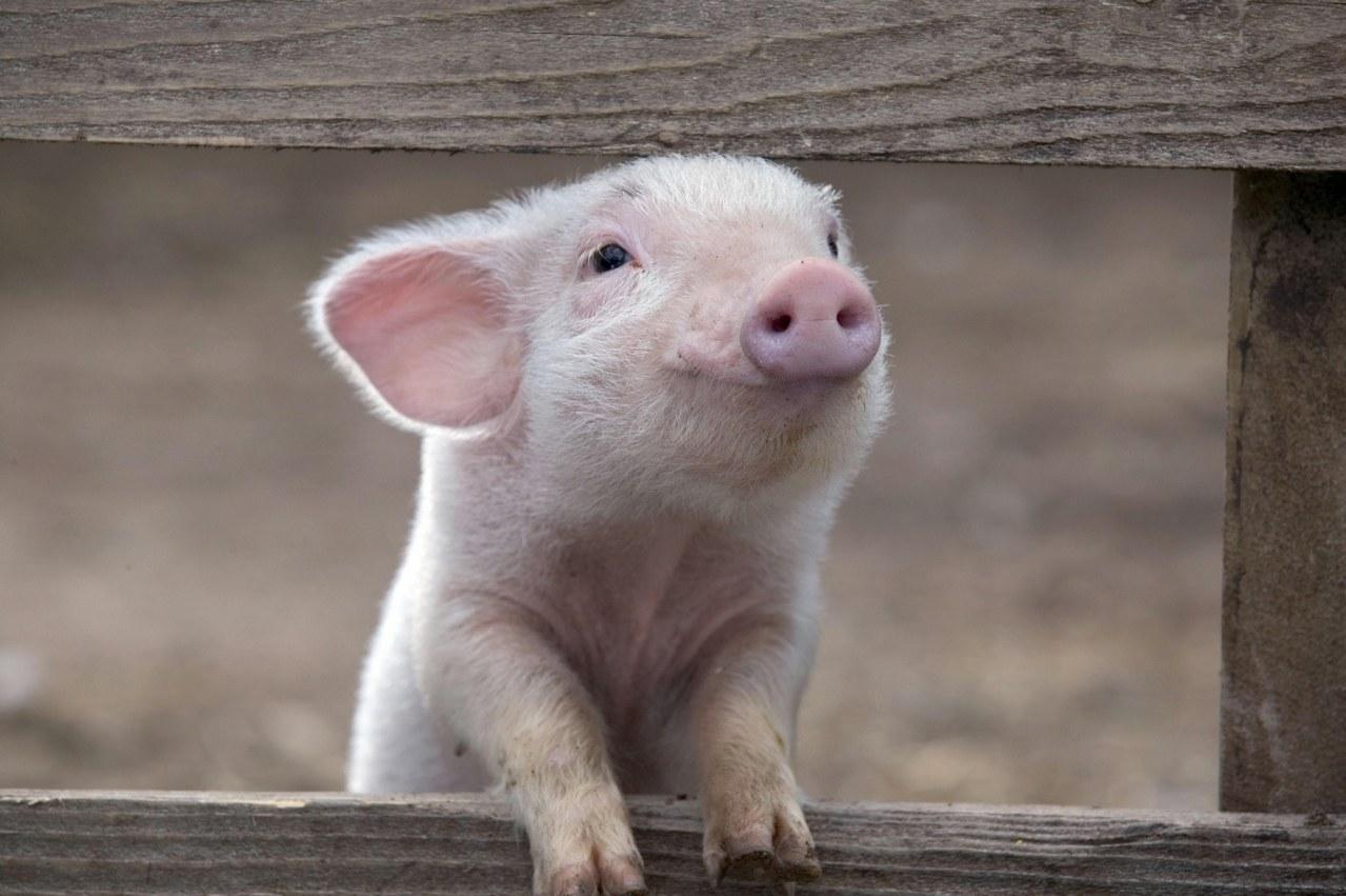 Schweinchen Wilbur und seine Freunde - Bild 26